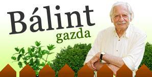 Bálint Gazda honlapján hasznos információkat olvashatunk