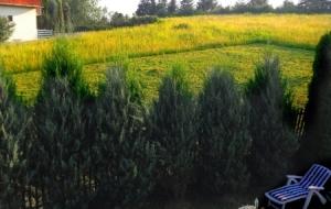 A kaszált bükkszéki mező (hát még ha a levágott fű illatát is éreznénk...)