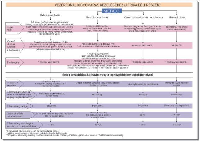 A vezérfonal magyar átirata (forrás: antivenom leaflet)